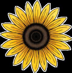 arisha flower realpeople likе follow freetoedit