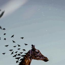 freetoedit srcbirds birds