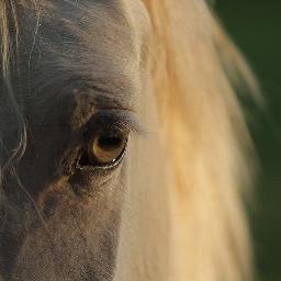 freetoedit horselove