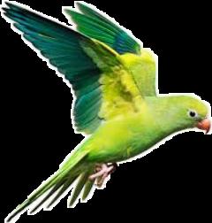 parrot freetoedit