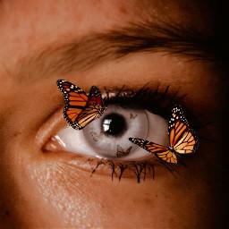 ircmysteriouseye mysteriouseye butterflies butterfly eye freetoedit