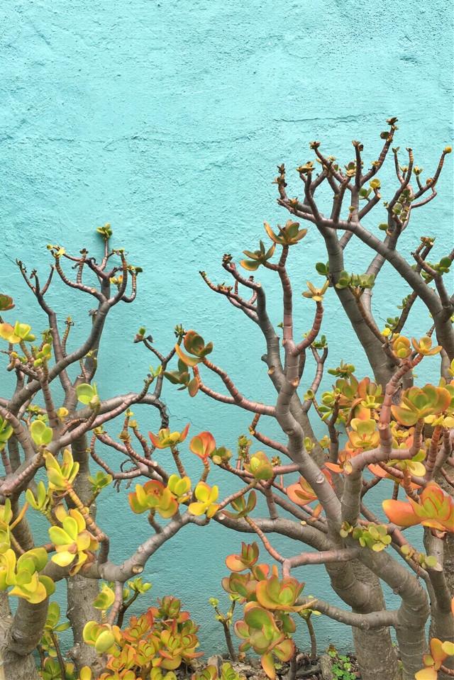 #urbanandstreet #housewall #succulents #softgrungetexturewallbackground #urbannaturephotography   #freetoedit