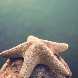 rockysurface starfish seawaterbackground nature stilllife freetoedit