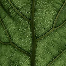 green nature background backgrounds pattern freetoedit