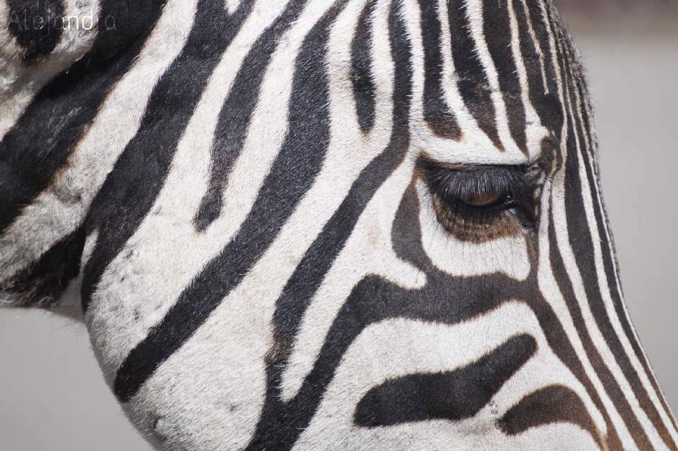 Look for the magic in every moment   #Animals #zebra #nature #closeup #photography