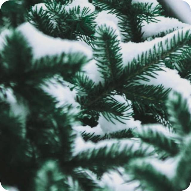 #background #floral #snow #snowvibe #winterwonderland #winterbackgrounds