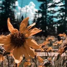 flower floral yellow nature hike