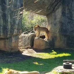 zoo beautifulday relaxedandhappy freetoedit