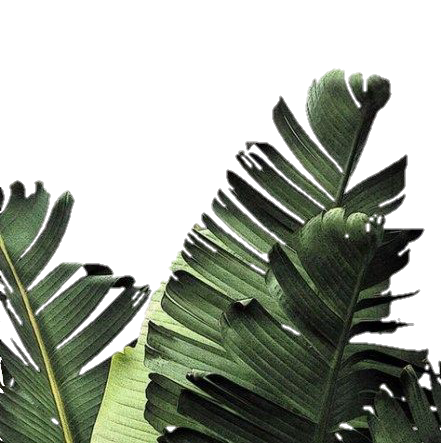 #plants #tropical #leafs #border