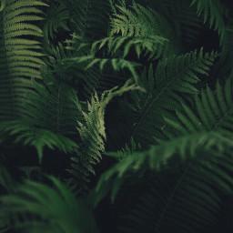 nature deepgreen leaves ferns gogreen_nature_is_calling freetoedit