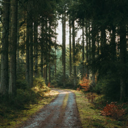 woods forest nature background backgrounds freetoedit