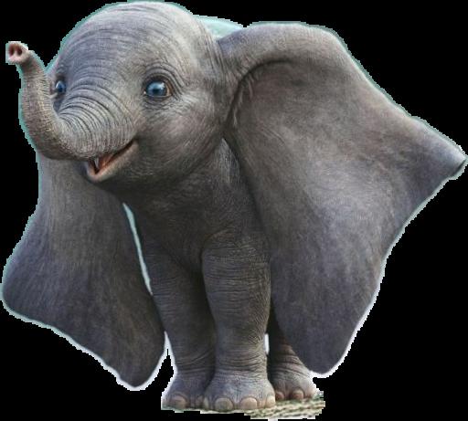 #elephant #baby #dumbo