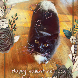 cat snickers valentinesday love cutie day freetoedit