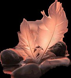 freetoedit plume scfeathers feathers