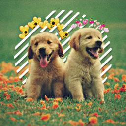 freetoedit dogs follow4follow vote echeartcrowns heartcrowns