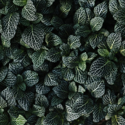 green nature leaves background backgrounds freetoedit