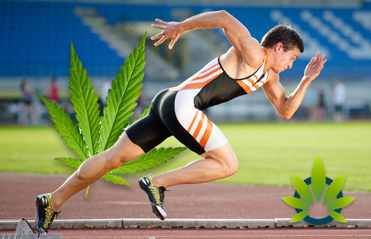 """<p>Best CBD for Athletes information can be found here - <a href=""""https://gab.com/cbdforathletes"""">https://gab.com/cbdforathletes</a></p> CBD and anti-seizure treatment <p>This product just isn't for use by or sale to individuals beneath the age of 18. This product must be used only as directed on the label. Consult with a physician earlier than use if you have a serious medical situation or use prescription medications. A Doctor&rsquo;s advice should be sought before utilizing this and any other supplement. All logos and copyrights are property of their respective owners and usually are not affiliated with nor do they endorse this product.</p> Natural pain reduction and anti inflammatory properties <p>CBD hemp oil drug interactions are sometimes overlooked and it is essential to shed extra gentle on this topic because the CBD trade takes another step forward. As research on CBD continues, more states might consider the legalization of hashish products, resulting in wider availability.</p> Shop Verified Premium CBD <p>&nbsp;</p>   What drugs should not be taken with CBD?   Vaporizers. Many brands offer vaporizers with CBD. Similar to e-cigarettes, vaporizers heat up dry cannabis flower or CBD oils, creating an inhalable vapor. """"When you vape or smoke, it quickly hits the bloodstream, so there is a quick effect onset that tapers off more quickly than edibles,"""" says Boehnke.   <p>&nbsp;</p>  CBDfx Terpenes Vape Pens are disposable vapes full of 50 mg of full spectrum cannabidiol and flavored with real terpenes. Some research have found that cannabis might assist anxiety. At Anavii Market, all of our products marketed as hemp oil include CBD oil. Enjoy the purity of CBD extracted from industrial hemp. There is little research on CBD&rsquo;s effects on blood alcohol ranges. In a 2013 report, researchers administered CBD to a 19-yr-previous lady with hashish withdrawal syndrome over a ten day period, which effectively resulted in reduced withdrawal symptoms.  <p>Hemp-deri"""