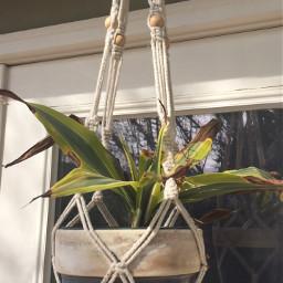 singlestilllife stilllife plant aethetic hangingplants pcsinglestilllife