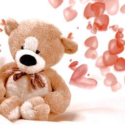 bear love hearts