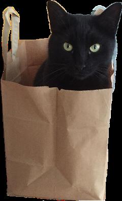 katze cat ccc picsart black schwarzekatze freetoedit