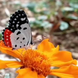 butterfly hdr nature kerala