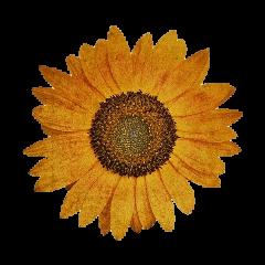 flower flor aesthetic vintage retro freetoedit