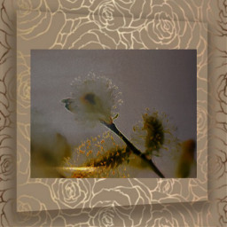 freetoedit thankyouforyourstickers flower frame golden