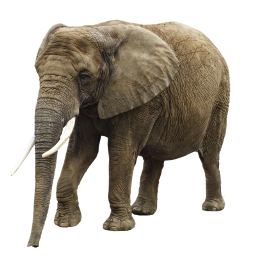 freetoedit elephant animal