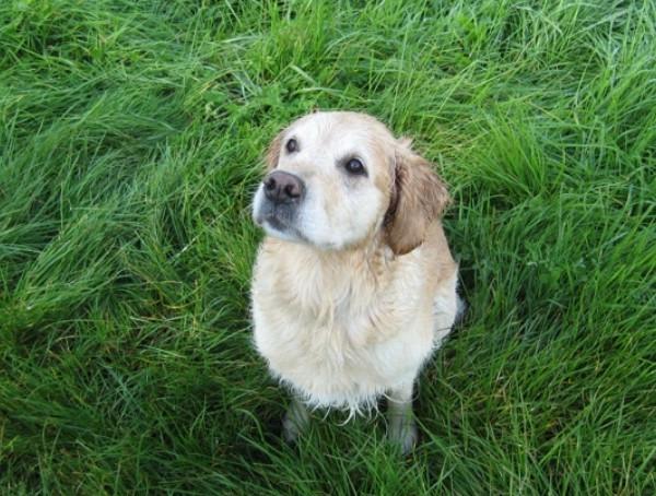 """Mein kleiner Schatz """"Butterblume"""" immer in meinem Herzen 🐶😍🐶😍🐶😍🐶😍🐶 #dogs #dogslover #love #cute #loveyou"""