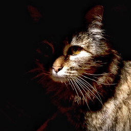 catlover cat cateyes catsphotography catselfie pclightingthedark lightingthedark