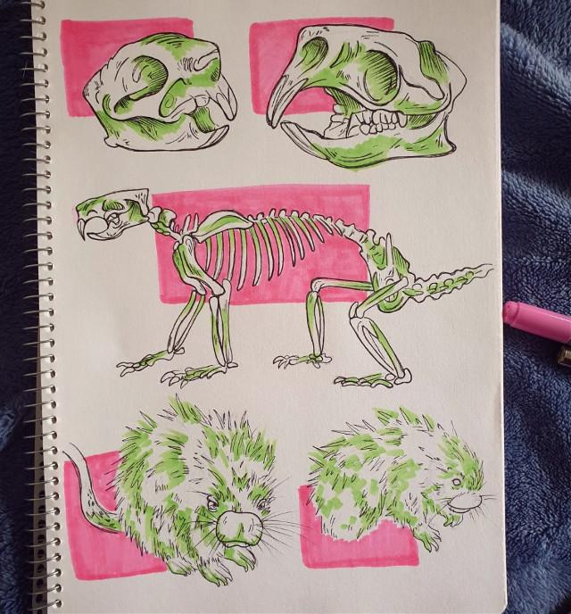 Porcupine study  #animal #animalanatomy #drawing #art #illustration #traditonalart #ink #markers #tradionalartist #copics #copicmarkers #copicmarkerau #copicciao #micronpigma #sketch    #freetoedit