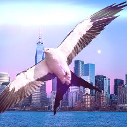 bird lenflare challenge cityscape giantanimals