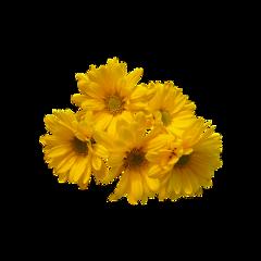 flower cute aesthetic flowers bujo freetoedit