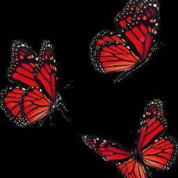 butterfly butterflies aesthetic red bug freetoedit