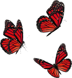 butterfly butterflies aesthetic red bug freetoedit