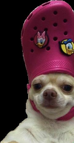 perro firulais memes freetoedit