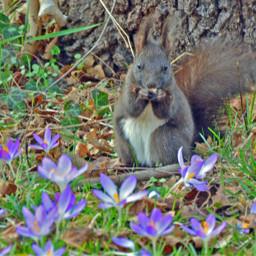 munich spring bavarian animal flowers pcspringinyourcity springinyourcity photography