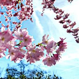 spring springflowers springtime springishere flowers