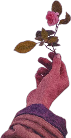 roseedit rose aestethic pink pinkaesthetic freetoedit