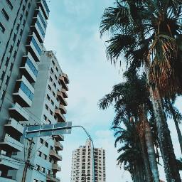 urban building palmtree