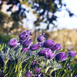 spring springtime springday flowers flowerphotography