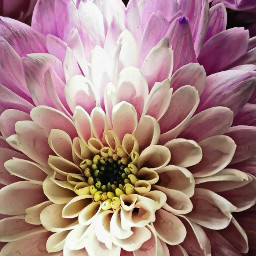 closeup flower flowerpower colourful magiceffectmoonlight freetoedit