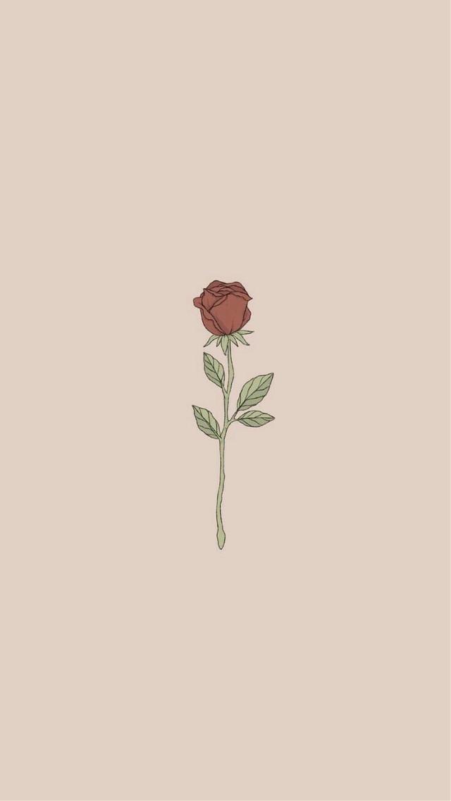 #freetoedit #rose