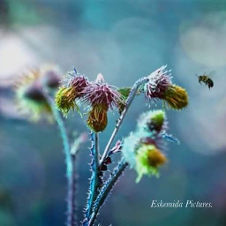 nature bee flowerphotography fotoedit miracle