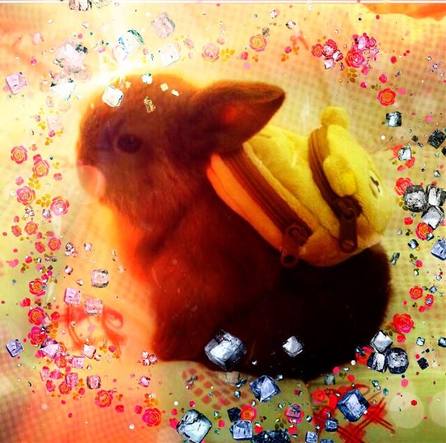 #bunnylove