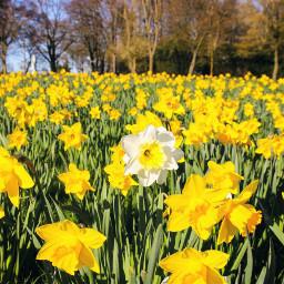 interesting stayinspired spring flowers springtime