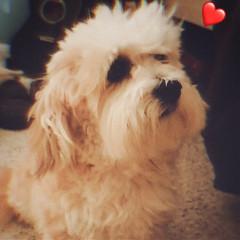 animal_lover3194