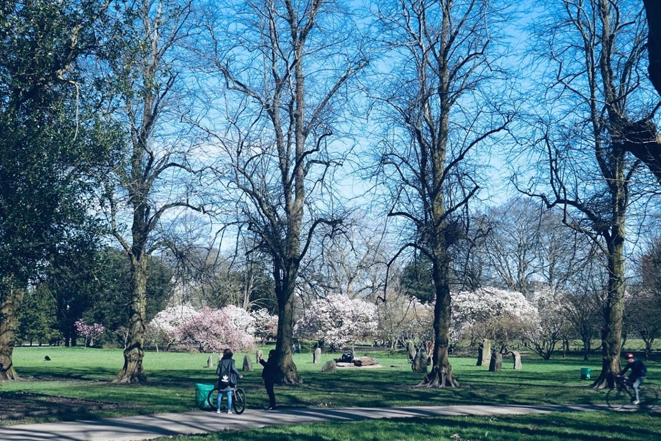 #freetoedit #spring#springvibes #tree#photography #sky #night #nature #london