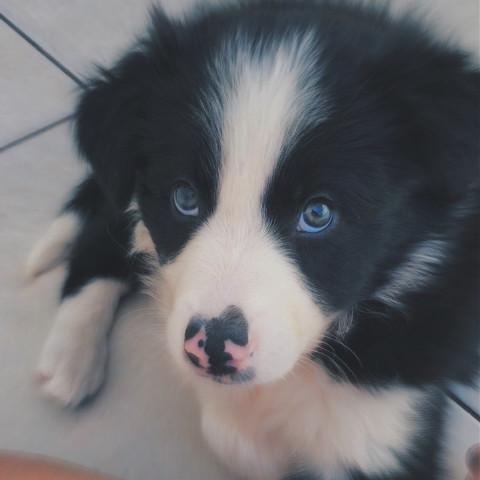 #mybaby,#cutie,#puppylove