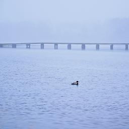 freetoedit foggyday bird serenity
